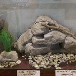 aquariumbackgrounds_large